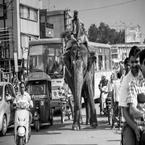 Driving in India with an elephant